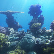 Stock Photo: Coral reef of Red Sea