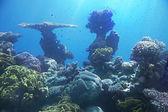 Coral reef van rode zee — Stockfoto