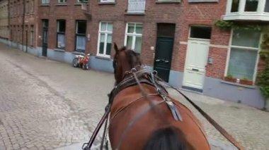 Paseo a caballo carro alrededor de la calle — Vídeo de stock