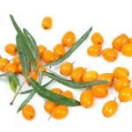 Fruits of sea buckthorn — Stock Photo #30976237