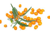Fruits of sea buckthorn — Stock Photo