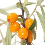 Fruits of sea buckthorn closeup — Stock Photo #31012251
