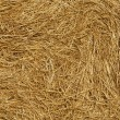 Fresh Straw closeup — Stock Photo