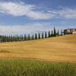 Farmhouse with cypress, Tuscany — Stok fotoğraf