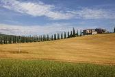 Ferme avec cyprès, Toscane — Photo