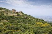 Tuscany summer landscape — Stock Photo