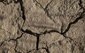 Close-up of arid cracked earth — Stock Photo