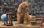 Dog Education — Stock Photo