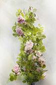 Watercolor climbing rose — Stock Photo