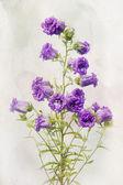 Watercolor Lilac campanula — Stock Photo