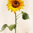 Watercolor sunflower — Stock Photo #51537889