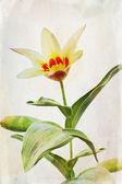 Watercolored tulip — Stock Photo