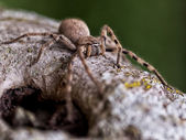 Baboon Spider — Stock Photo