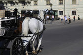 Horse buggy in Vienna — Stock Photo