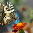 Butterfly — Stock Photo #1542524