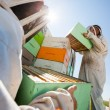 Beekeepers Unloading Honeycomb Boxes From Truck — Stock Photo #33347683