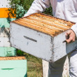 Midsection Of Beekeeper Carrying Honeycomb Box — Stock Photo #33348799