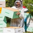 Stock Photo: Portrait Of Beekeeper Working At Apiary