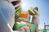 Beekeepers Unloading Honeycomb Boxes From Truck — Stock Photo