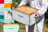 Midsection Of Beekeeper Carrying Honeycomb Box — Stock Photo