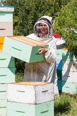 Portrait Of Beekeeper Working At Apiary — Stock Photo