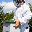 Stock Photo: Beekeeper Carrying Honeycomb Box