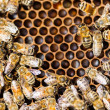 Bees Swarming On Honeycomb — Stock Photo