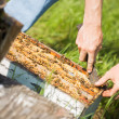 Stock Photo: Beekeeper Removing Honeycomb Frames From Crate