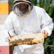 Stock Photo: Beekeeper Inspecting Honeycomb Frame At Apiary