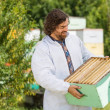 Beekeeper Looking At Crate Full Of Honeycombs — Stock Photo #33354255