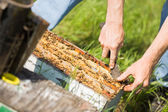 Beekeeper Removing Honeycomb Frames From Crate — Stock Photo