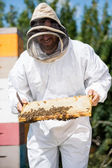 Beekeeper Inspecting Honeycomb Frame At Apiary — Stock Photo