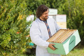 Beekeeper Looking At Crate Full Of Honeycombs — Stock Photo