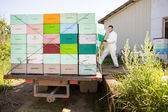 Beekeeper Loading Honeycomb Crates In Truck — Stock Photo