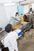Beekeepers Working On Honey Extraction Plant — Stock Photo