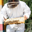 Stock Photo: Beekeeper Inspecting Honeycomb Frame On Farm