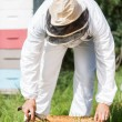 Stock Photo: Beekeeper Working In His Apiary
