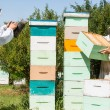 Stock Photo: Beekeepers Working At Apiary