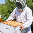 Male Beekeeper Carrying Honeycomb Box At Apiary — Stock Photo #33945853