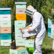 Male Beekeeper Carrying Honeycomb Crate — Stock Photo #33948059