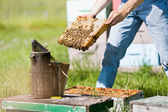 Male Apiarist Smoking A Beehive — Stock Photo