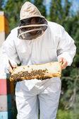 Beekeeper Inspecting Honeycomb Frame On Farm — Stock Photo