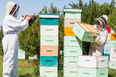 Beekeepers Working At Apiary — Stock Photo