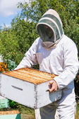 Male Beekeeper Carrying Honeycomb Box At Apiary — Stock Photo