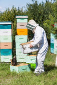 Male Beekeeper Carrying Honeycomb Crate — Stock Photo