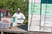 Beekeeper Loading Honeycomb Crate In Truck — Stock Photo
