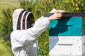 Beekeeper With Fume Board — Stock Photo