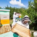 apicultores trabajando en Colmenar — Foto de Stock