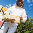 Stock Photo: Beekeeper Holding Honeycomb Frame At Apiary