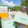 Stock Photo: Beekeeper Working With Colleague At Apiary